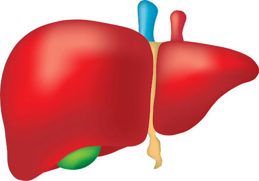 Stop and Flush Toxins from the Liver: 5 Things to Consider - Healthy Lifestyle