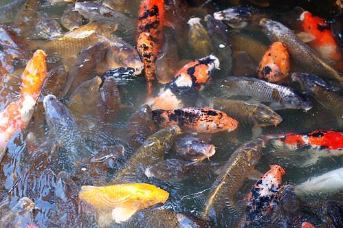 FishFrenzy