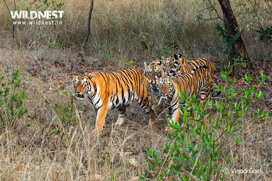 Unforgettable Trip to Tadoba Andhari Tiger Reserve