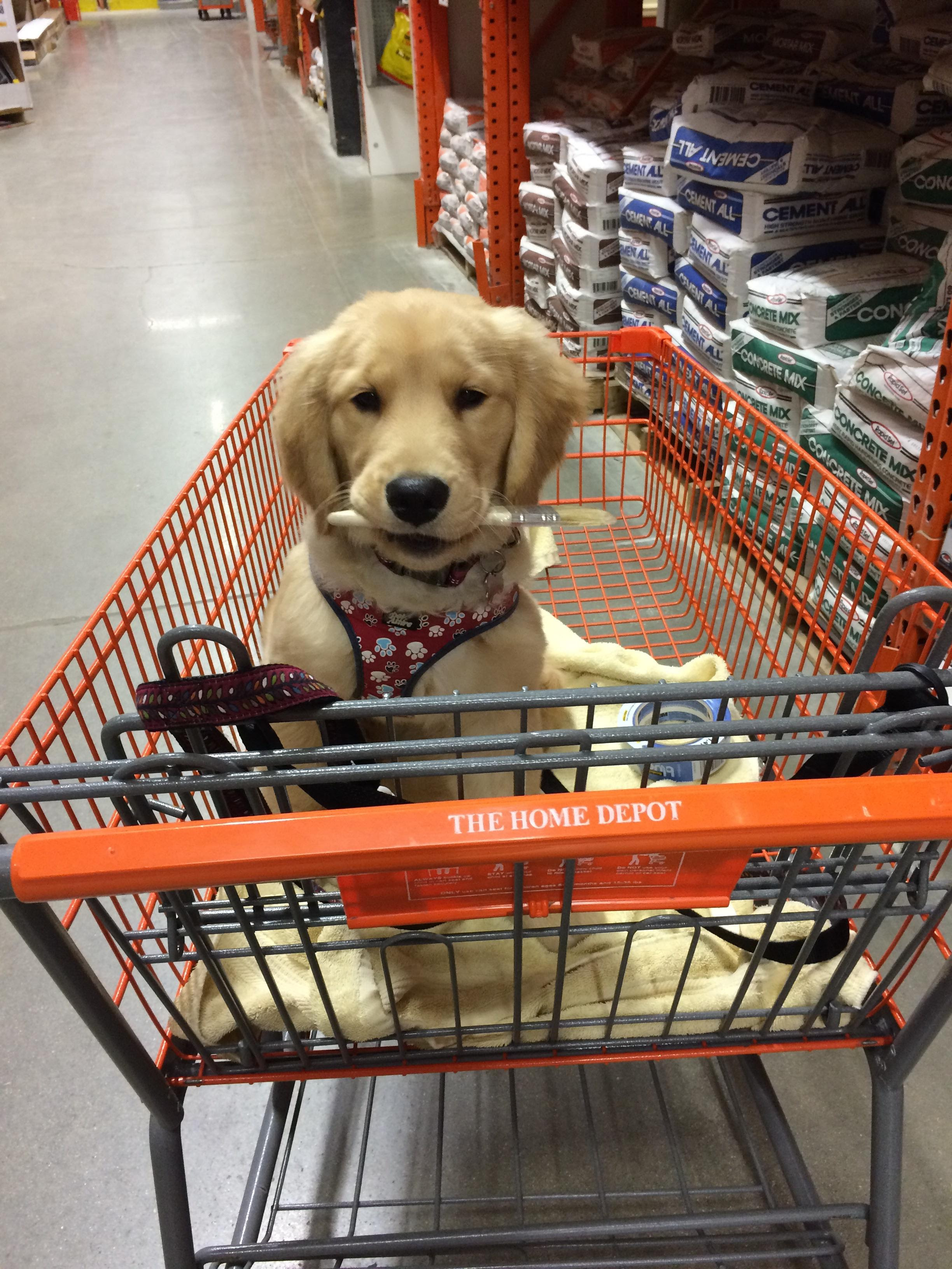 TIL Home Depot is puppy friendly aww
