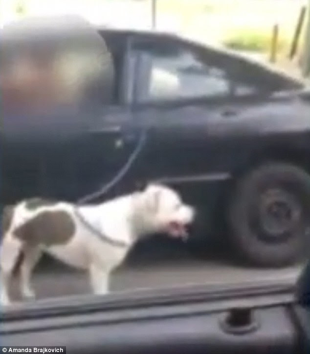 An unidentified woman was spotted walking her dog while driving in her car down a busy road in Stockton, California