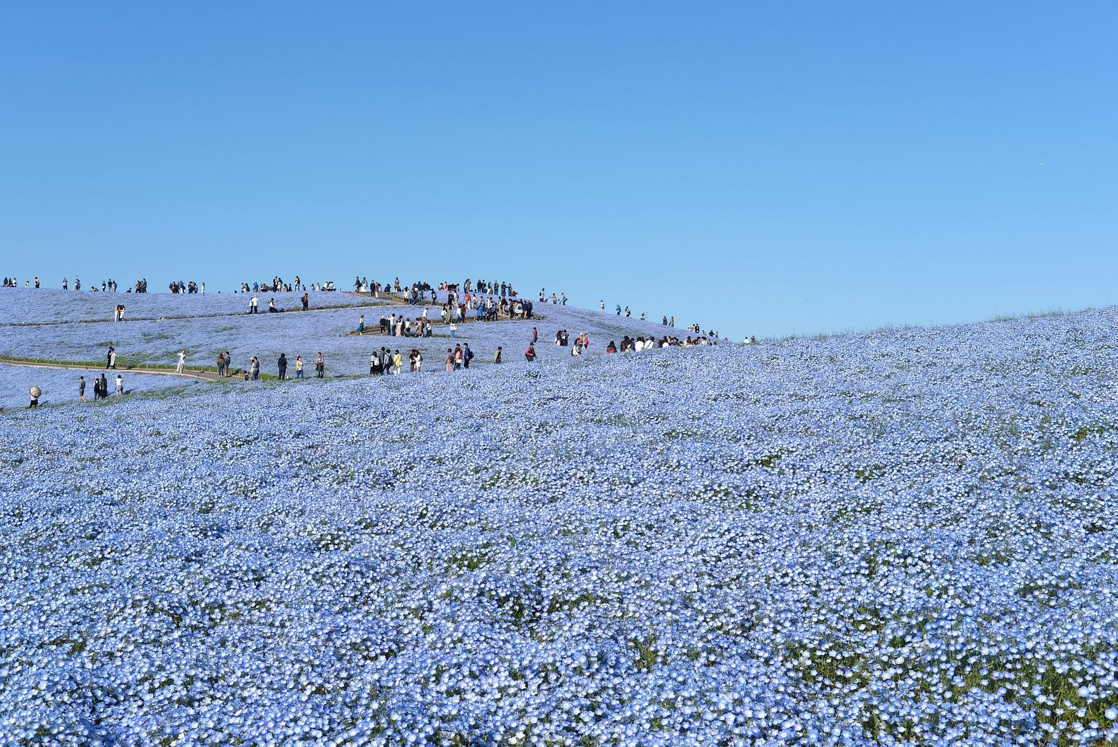 photo Hitachi Seaside Park Ibaraki Japan 6.jpg