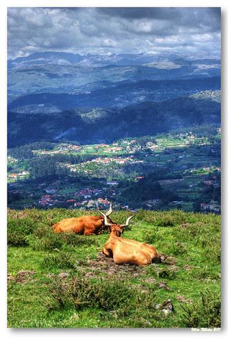 Monte das Lameiras #5 by VRfoto