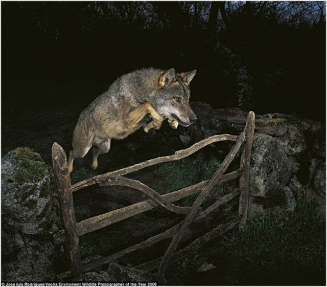 Fotografias ganhadoras do concurso de vida silvestre e meio ambiente 2009
