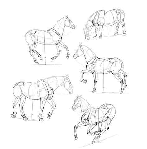 draw horses step  step    animal