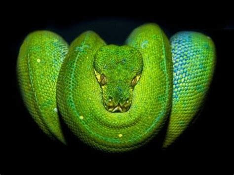 Top 10 Venomous Snakes in the World   YouTube