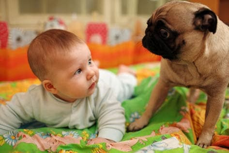 Dogs May Protect Babies from Some Infections, Study Says