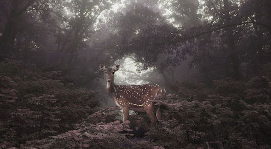In Dreams: Photography by Petros Koublis