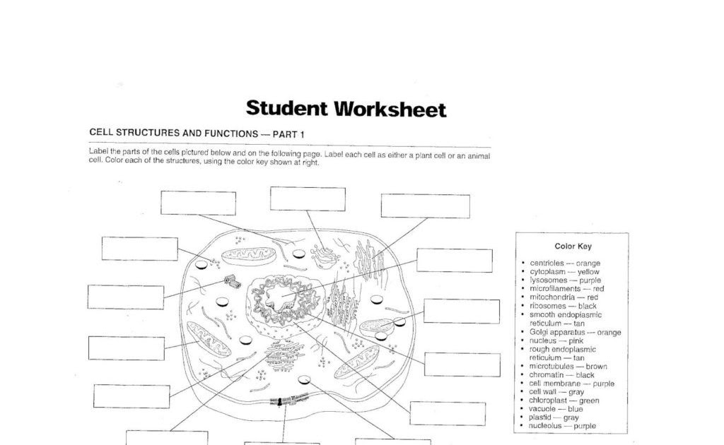 Cell Membrane Structure And Function Worksheet Answer Key ...