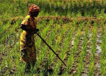 Adaptarse al clima o morir de hambre