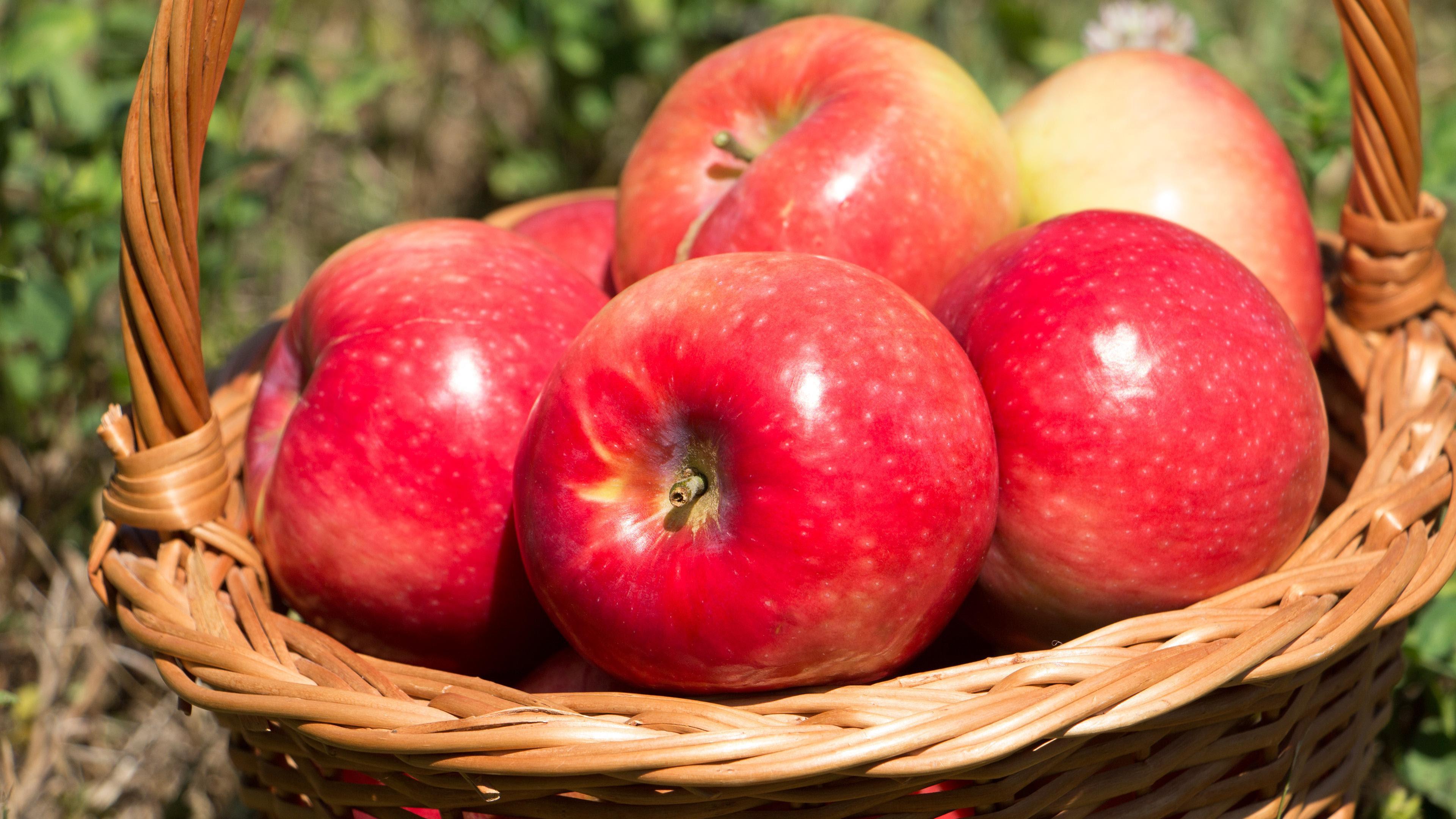 gambar buah apel dalam keranjang