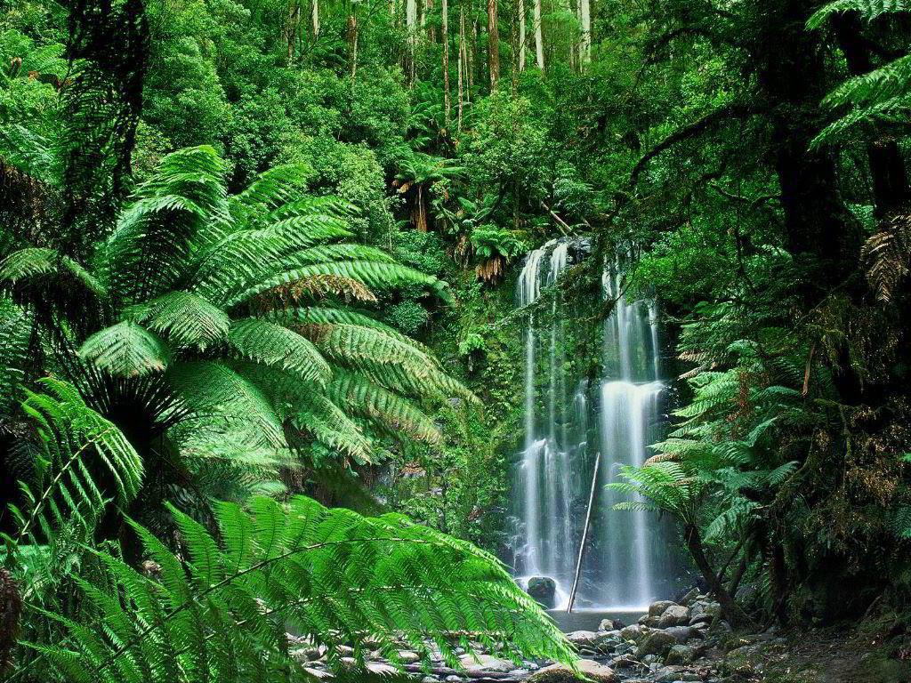 perierga.gr - Cherrapunji: Το πιο υγρό μέρος του πλανήτη