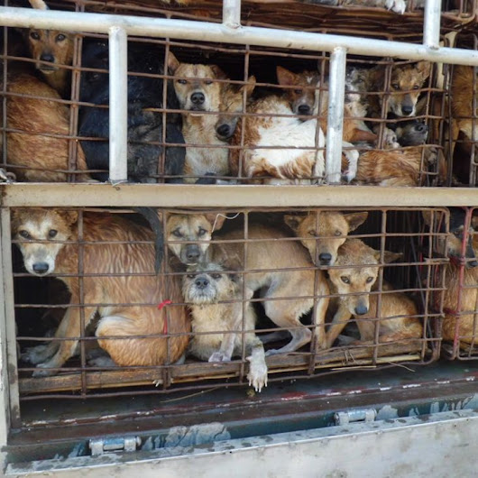 Asia Canine Protection Alliance  - Take URGENT action to stop the brutal slaughter of dogs for their meat!