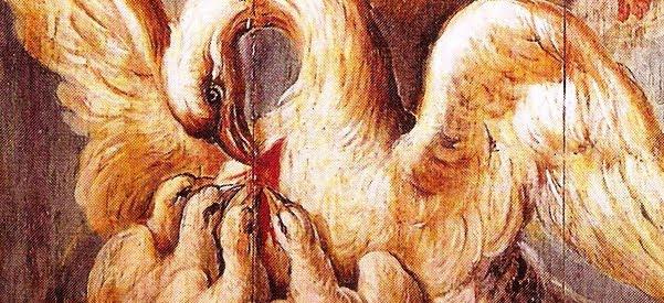 Resultado de imagem para bom pelicano do deserto