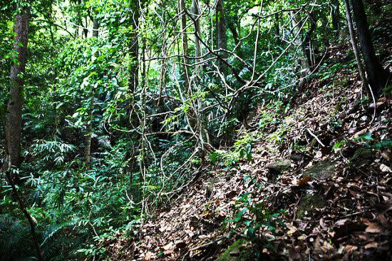 perierga.gr - Φύτεψε ένα ολόκληρο δάσος με τα... χεράκια του!