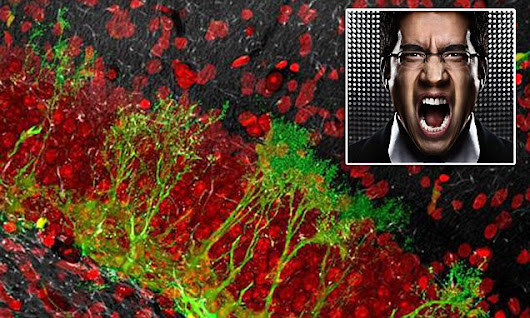 Aggression causes new functioning nerve cells to grow in brains