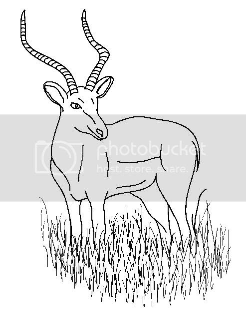 impala coloring pages  save the animals