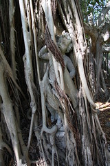 Statue in the banyan trees