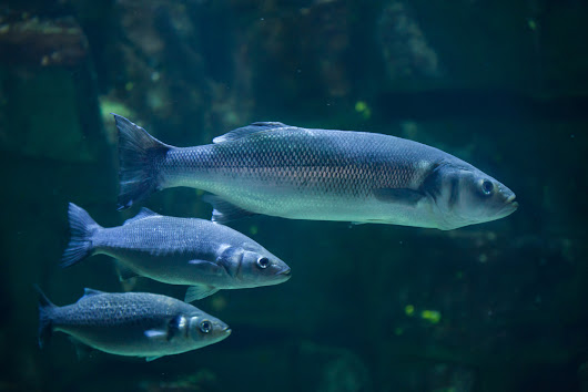 Noise Pollution Is Stressing Fish Out - Environmental Watch