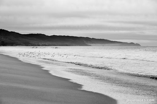 Photo Print of LIMANTOUR BEACH POINT REYES NATIONAL SEASHORE CALIFORNIA BLACK AND WHITE Print Framed Picture Fine Art Photography Large Print Wall Decor Art For Sale Stock Image Photo Photograph High Resolution Digital Download Aluminum Metal Acrylic Canvas Framed Photo Print Buy Photo by Robert Wojtowicz Fine Art Photographer
