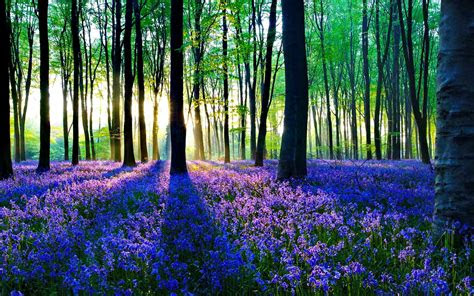 beautiful forest flowers wallpapers wallpaper carax