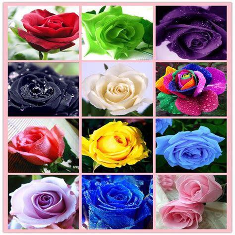 Hot Sale Rose Seeds Rainbow Purple Red Black White Pink