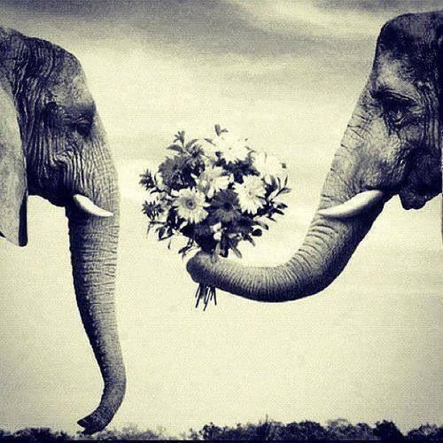 Love is adorable!