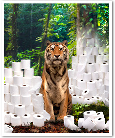 Tiger surrounded by toilet tissue