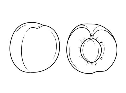apricot 3 coloring page