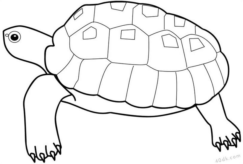 50 Kaplumbaga Boyama Sayfasi Resim Boyama