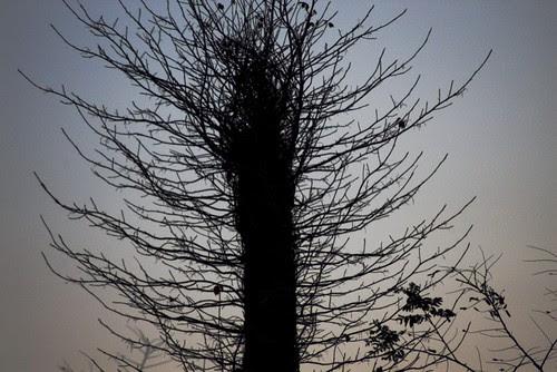 bristle tree.jpg