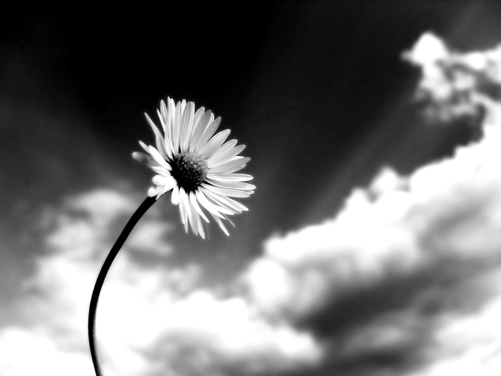 Blogs Photography Flowers Black And White Photos Clip Art Library