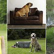 'My dog doesn't match my sofa': Animal charities reveal most shocking excuses owners have given for getting rid of their pets