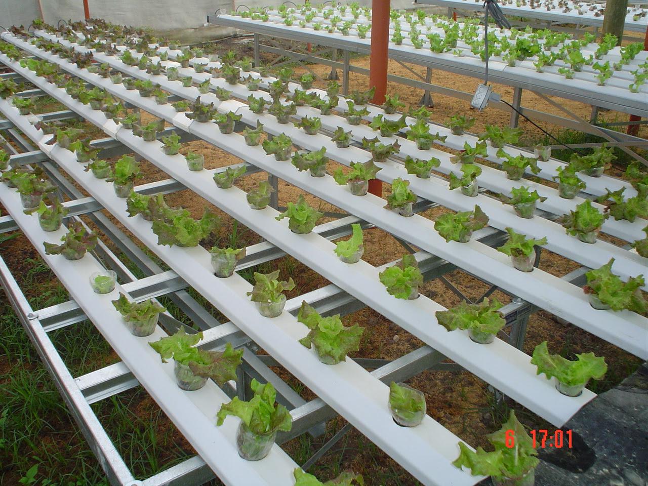 cultivos hidroponicos, tecnicas, cultivos, skizzo