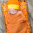 Bangor Maine Newborn Photography - Newborn in Candy Corn and Pumpkin