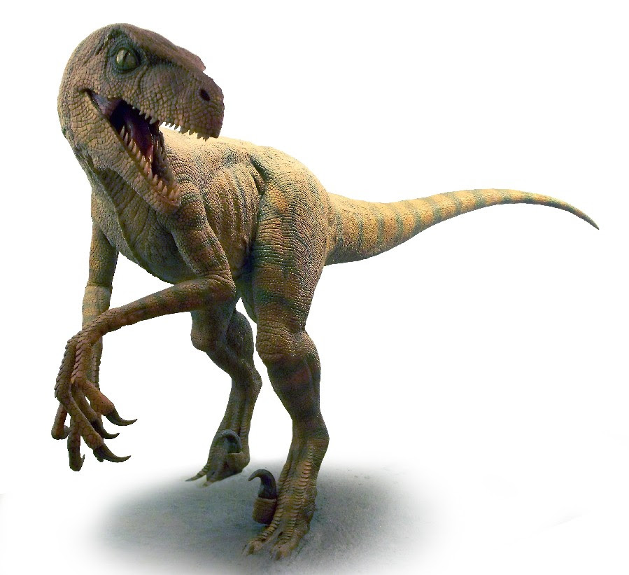 Velociraptor Pictures Facts The Dinosaur Database