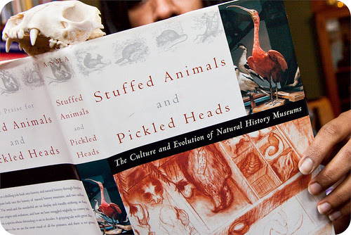 Image result for stuffed animals and pickled heads asma book