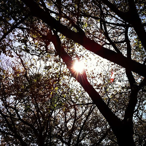 Sun peeking shyly through the leaves in a busy spring afternoon.