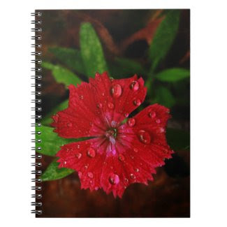 Red Dianthus With Raindrops notebook
