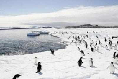 150,000 penguins killed after colossal iceberg in Antarctica leaves colony landlocked - Times of India