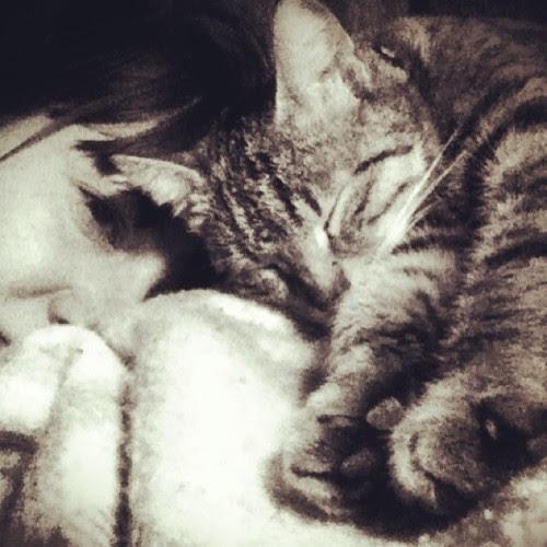 mylo'lulululu #cat #mylo #sleep #sleepingcat