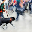 Public Access for Service Dogs | Dog Trainer College