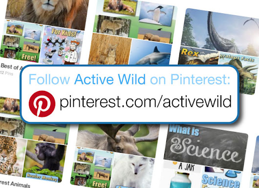 Active Wild on Pinterest: What Is Pinterest & How Does It Benefit Animal Fans?