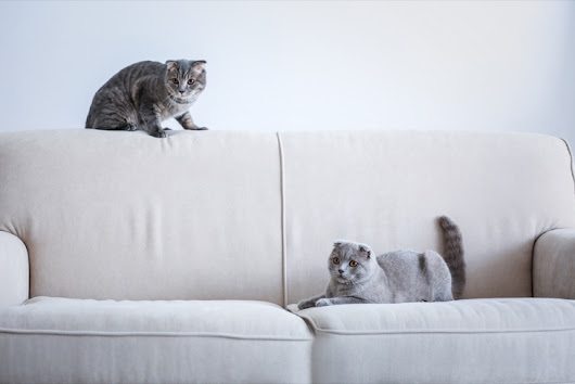 The REAL Reason Your Cat Scratches Furniture - Cats and Meows