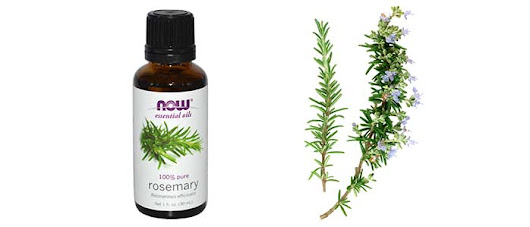Rosemary Essential Oil Uses & Benefits for Skin, Hair Loss/ Growth, Health Benefits -Uses for & Properties of Rosemary Essential oil