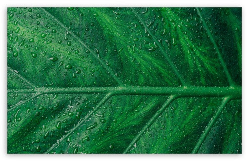 Green Leaf Aesthetic Ultra Hd Desktop Background Wallpaper For 4k Uhd Tv Widescreen Ultrawide Desktop Laptop Tablet Smartphone