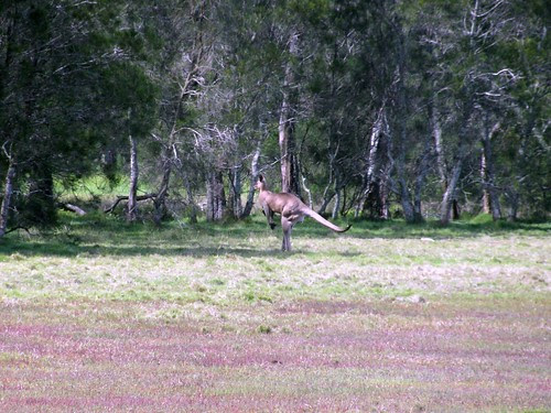 Chasing Roos