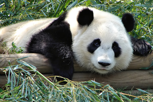 Pleasing Panda: Your Guide to Google's Search Algorithm | Counterintuity