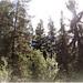 California Native Botanicals