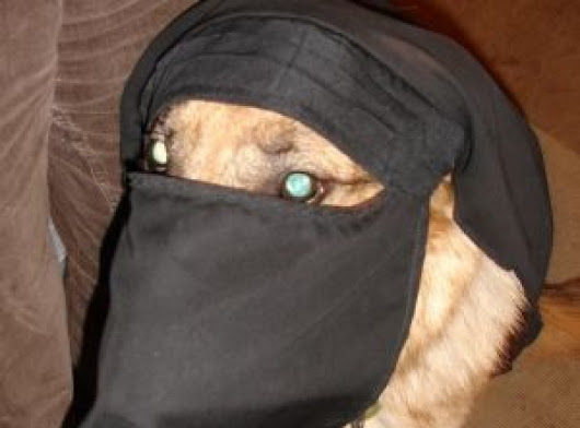Niqab wearing Dog harassed in dog park